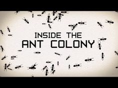 Deb Gordon's animation about ant colonies | Summer research flashback!
