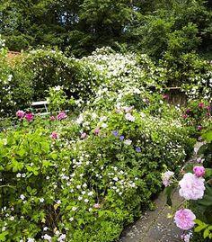 - Roses in bloom - #roses #historicalroses #garden #gardening #jettesgarden #gardenvisits #jettefrölich #jettefroelich #jettefrölichdesign #jettefroelichdesign #design #danishdesign #scandinaviandesign #gardendesign #gardendecor #homedecor #interiordesign
