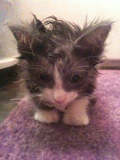Dieses Kätzchen | 22 Tiere, die einen fieseren Bad Hair Day haben als Du
