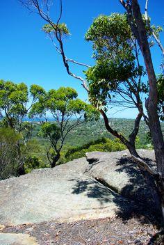Journal Event Code : TRAVE Bush Walking, Cromer Heights , Sydney Australia