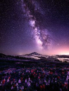 Celestial Existence Milky Way, Lupine and Indian Paintbrush, Goat Rocks Wilderness, Mount Rainier National Park, Washington by Scott Smorra Beautiful Sky, Beautiful Landscapes, Beautiful World, Beautiful Places, Cool Pictures, Beautiful Pictures, Ciel Nocturne, Sky Full Of Stars, Jolie Photo