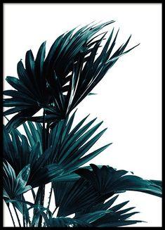 Affiche botanique avec feuilles de palmier sur fond bleu...