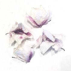 PHOTOGRAPHY | Instagram JOUE Design | @jouedesign | orchids purple papery