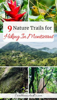 Find out about the 9 official nature trails for hiking in Montserrat, the Emerald Isle of the Caribbean. With wide variety of wildlife and plants over a lush 40 square miles landscape, Montserrat is a nature lovers paradise. Puerto Rico, Cuba, Les Bahamas, Caribbean Vacations, Emerald Isle, Hiking Tips, Travel Guides, Travel Advice, Travel Tips