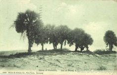 Isle of Palms Old Post Cards - Google Search