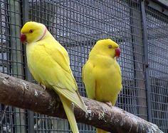 free-ads.eu - Birds classifieds: Parakeets and Conures - free ads