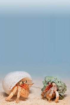 crab- igor siwanowicz