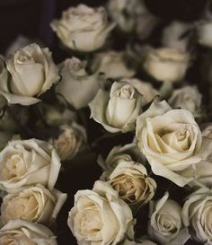 My Story... beautiful aged white roses