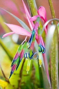 http://pixdaus.com/bromeliad-flower-plant/items/view/619340/