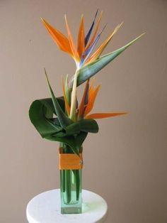Birds of paradise arrangement Tropical Centerpieces, Tropical Flower Arrangements, Ikebana Flower Arrangement, Beautiful Flower Arrangements, Flower Vases, Centerpiece Ideas, Exotic Flowers, Tropical Flowers, Amazing Flowers