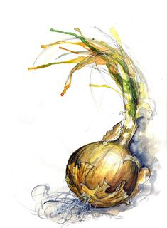 Onion Study IV | Explore Amy Holliday's photos on Flickr. Am… | Flickr - Photo Sharing!