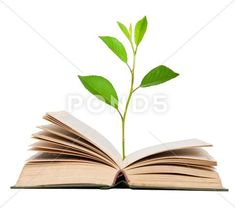 Green sprout growing from open book Stock Photos , Open Book Drawing, Cubby Tags, Book Aesthetic, Green Plants, Sprouts, How To Draw Hands, Place Card Holders, Stock Photos, Vegetable Gardening