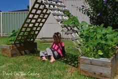 Making a bean hut (grow climbing, string beans up a lattice that kids can also play under)
