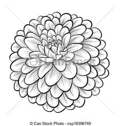 Vector - beautiful monochrome black and white dahlia flower isolated on white background - stock illustration, royalty free illustrations, stock clip art icon, stock clipart icons, logo, line art, EPS picture, pictures, graphic, graphics, drawing, drawings, vector image, artwork, EPS vector art