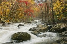 Song of the Smokies