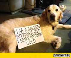 This Dog Doesn't Want to Do His Job!