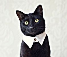 The Pointed Collar // if I had a cat...!