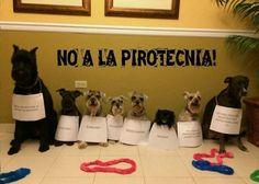 NO A LA PIROTECNIA!!!!! falta m i foto, NO A LA PIROTECNIA!!!