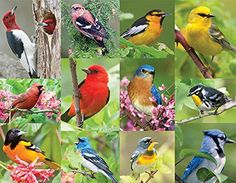 Springbok Birds of a Feather Jigsaw Puzzle 500Piece -- Check this awesome product by going to the link at the image.Note:It is affiliate link to Amazon.
