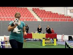 SM Kaninhoppning 2011, segerlopp krokig bana - YouTube