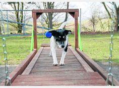 Spezielle Sport-Geräte bringen Hund und Mensch richtig auf Trab | Tiere