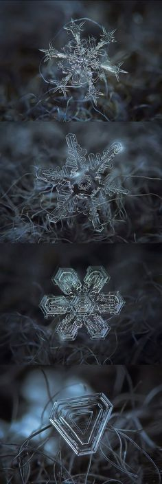 ❄A MidWinter's Night's Dream❄... By Artist Unknown... Micro-Photography Of Individual Snowflakes...