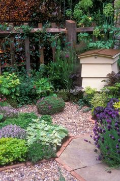 Keeping bees in hive in herb garden with garden path and fence, every garden needs bees...stunning!