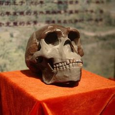 Peking man Skull.