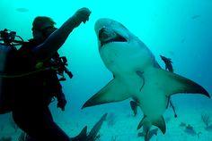 Marine Biologist Salary | Water World | Pinterest | Marines and ...
