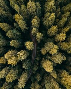 Redwood forest in northern California ~ drone photography by Colby Moore #road