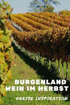 Burgenland Wein im Herbst Austria, Vineyard, Country, Amazing, Travel, Outdoor, Beautiful, Wineries, Dna