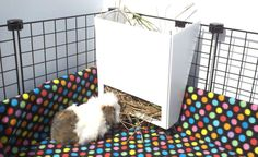 PiggyBedSpreads.com Making Your Guinea Pig's World a Beautiful Place!