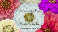 All things beautiful... Ecclesiastes 3:11