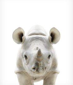 Baby Rhino Print