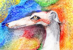 Colors of galgo