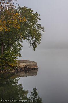 Autumn Weeping, Beloeil, Québec,  Photo by Richard Guimond ©2016 20161005 0168 8:36 (2)f  Canon EOS 40D 50mm 1/640 f7,1
