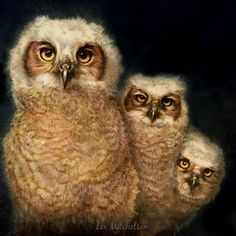 "Daily Paintworks - ""Three Great Horned Owlets, Wild Heart Ranch (Bubo virginianus)"" - Original Fine Art for Sale - © Lee Mitchelson"