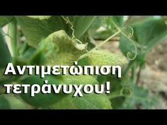 Herbs, Youtube, Nature, Plants, Gardening, Naturaleza, Lawn And Garden, Herb, Plant