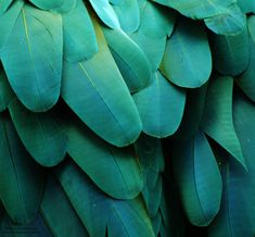 Photo about Macro photo of blue/turquoise macaw feathers. Image of macro, details, macaw - 38865977 Marsala, Mauve, Especie Animal, Red Feather, Photo Blue, Purple Aesthetic, Nature Images, Natural Forms, Shades Of Purple