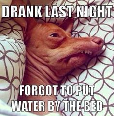Here's some of the best drinking memes online. If you like funny drinking memes, and other funny memes, this is the site for you! Memes Humor, Dog Memes, Funny Humor, Haha Funny, Funny Dogs, Awkward Funny, Funny Shit, Funny Stuff, Animal Memes