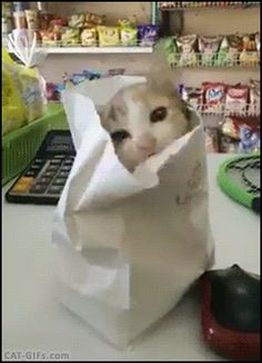 "Animated Kitten GIF •  When a kitten – playing in a paper bag – falls over.  ""Oops… gravity wins again."""