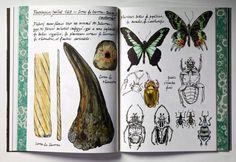 Les coups de crayon | Musée des Confluences