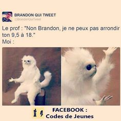 ;) suivez nous... Best Tweets, Funny Tweets, Funny Memes, Hilarious, Jokes, French Quotes, Funny Pins, Really Funny, True Stories