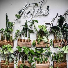 5 Tips for Keeping Houseplants Alive this Winter, Design*Sponge