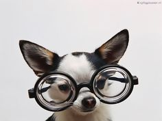 En toffe bril