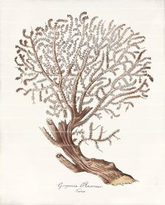 Coral Art Print - 8 x 10 - Gorgonia Placomus on Etsy, $14.00