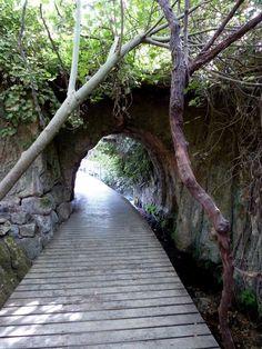 Israel Forever : Banias Nature Preserve, Roman Bridge