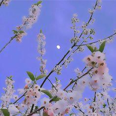 Angel Aesthetic, Nature Aesthetic, Flower Aesthetic, Blue Aesthetic, Aesthetic Photo, Aesthetic Pictures, Aesthetic Backgrounds, Aesthetic Wallpapers, Photographie Indie