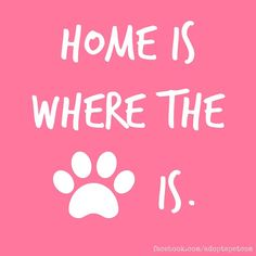 Home is where the paw is.                                                                                                                                                                                 More