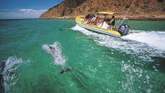 Twenty Reasons To Visit Kangaroo Island by Dilvin Yasa